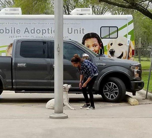 Снимки собаки, которую хозяева ведут в приют, никого не оставили равнодушным Брошенные животные, Счастливый конец, животные, новый дом, приют, собаки, фотосвидетельства, чувства собак