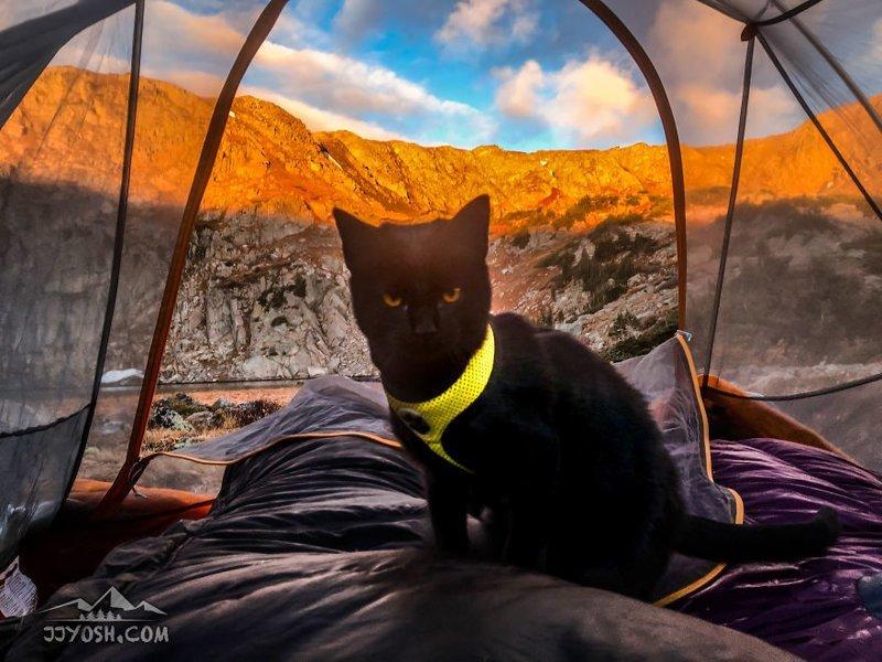 Вот только некоторые снимки с их Инстаграм-аккаунта: в мире, животные, кот, красота, природа, путешествие