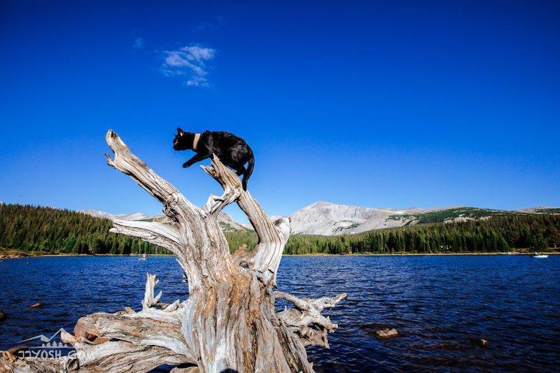 Знакомьтесь, этого кота зовут Саймон, и он уже в течение 2-х лет путешествует со своим хозяином в мире, животные, кот, красота, природа, путешествие