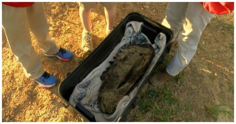 Дети на прогулке нашли мастодонта. И это не шутки ynews, Мастодонты, археология, миссисипи, находка, хоботные млекопитающие