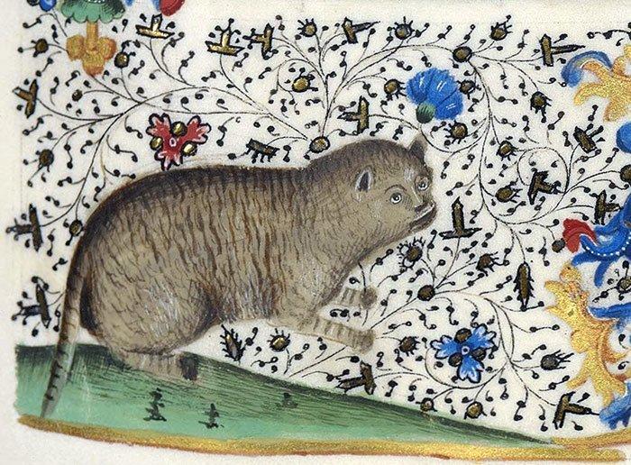 Кот с бровями  искусство, картина, кот, кошка, портрет, смех, средневековье, уродство