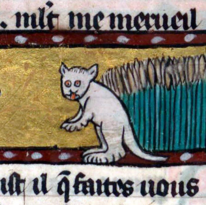 Белый кот  искусство, картина, кот, кошка, портрет, смех, средневековье, уродство