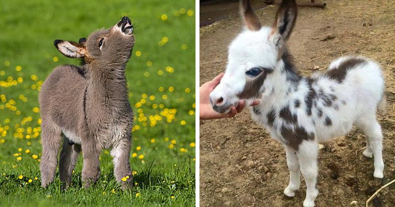 25 очаровательных маленьких осликов, которые сделают ваш день Ослики, детеныши, животные, мило, мимиметр, ослик, природа, фото