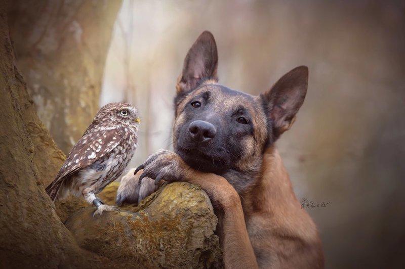 Настоящие друзья животные, позитив, собаки