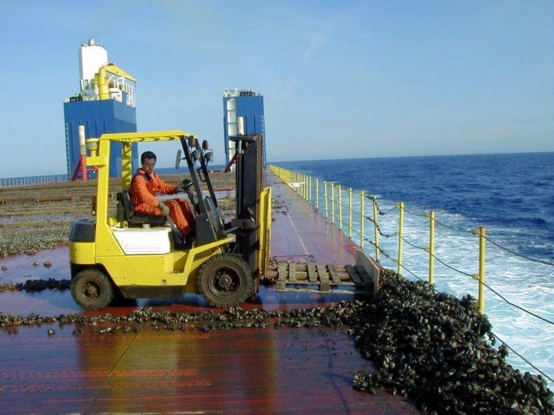 Seafood / Это мидии, отвалившиеся с дока во время перевозки море, морское судно, судно