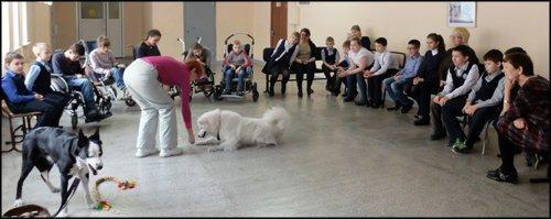 В штат красноярской школы приняли 40 собак ynews, кинология, образование, обучение, собаки, средняя школа