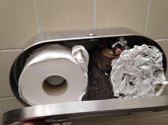 3. Неожиданный гость в держателе для туалетной бумаги вот это да!, зрелище, мерзкое, не для слабаков, не для слабонервных, туалет, ужасы нашего городка, унитаз