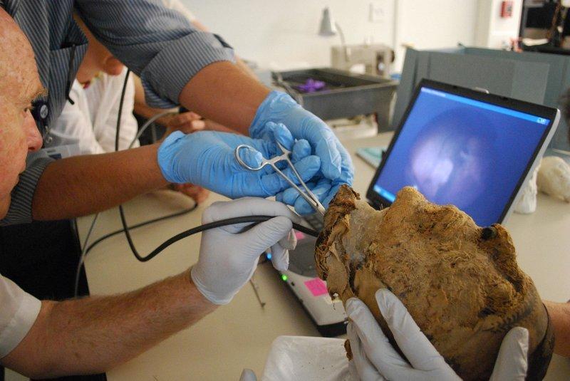 ДНК решили извлекать из коренных зубов мумии. По словам ученых, они являются генетическими капсулами времени. Задачу облегчало то, что голова была отделена от туловища в мире, люди, мумия, найка, находка, фбр