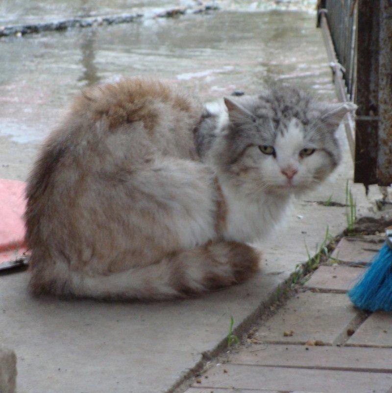 """А Вы знаете что существует кошачье сарафанное радио?  По нашему опыту существует! Кто то из хвостатых, на хуторе где мы живём, рассказывает: """"Если попал в беду иди по адресу *****. Там кормят и есть тёплый домик, где можно переждать неприятности."""" Подкидыш, домашнийпитомец, кот, котикиправятмиром, мойкотэ"""