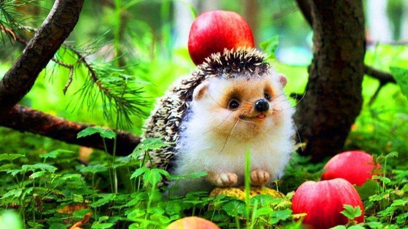 Носят ли ежики на своих колючках яблоки и грибы? вопрос, ответ., хочу все знать
