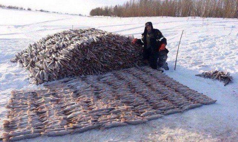 7. Перфекционист и искусный рыбак – два в одном. действительность, медведи, россия, русский, фото, экстрим
