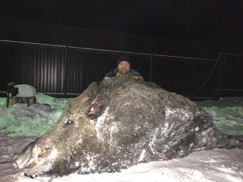 9. Фотошоп или реальность? Неужели, бегают по земле российской такие гиганты? действительность, медведи, россия, русский, фото, экстрим