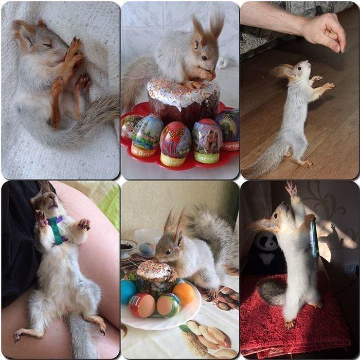 Как выходить и завести себе ручную белочку: опыт сибирской мамы белка, добро, животные, милота, спасение