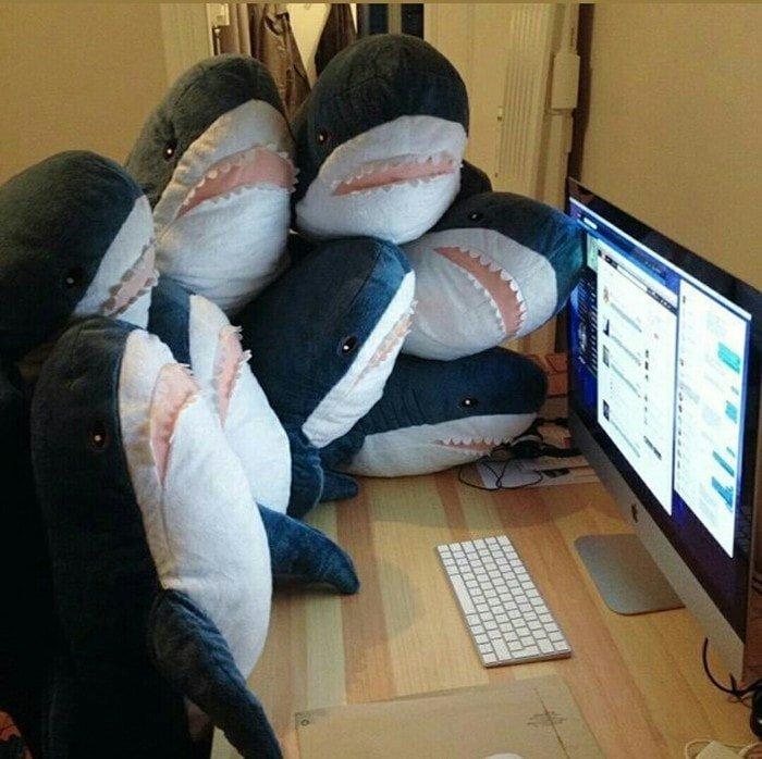 4. Они любят смешные видео в интернете акула, животные, игрушка, икея, прикол, юмор