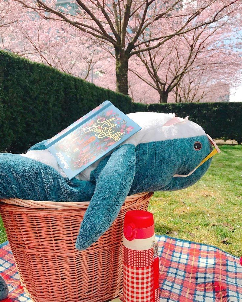 5. И пикники акула, животные, игрушка, икея, прикол, юмор