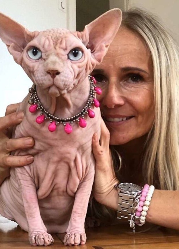 Хозяйка сравнивает Джердана с любопытным ребенком Джердан, Популярность, животные, кот, соцсеть, сфинкс, фото