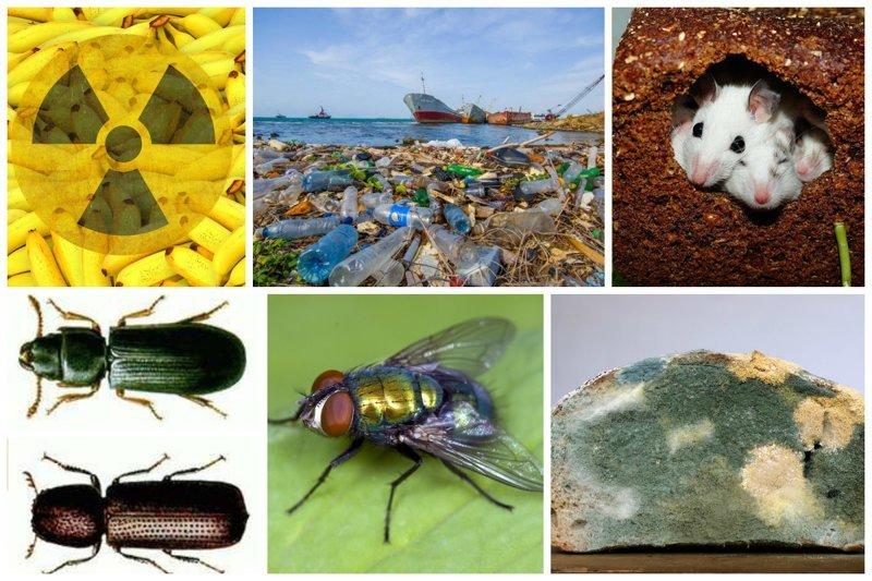 Если бы вы знали, что содержат ваши продукты, помимо самих продуктов интересное, насекомые, питание, продукты, содержание, факты, фекалии. крысы