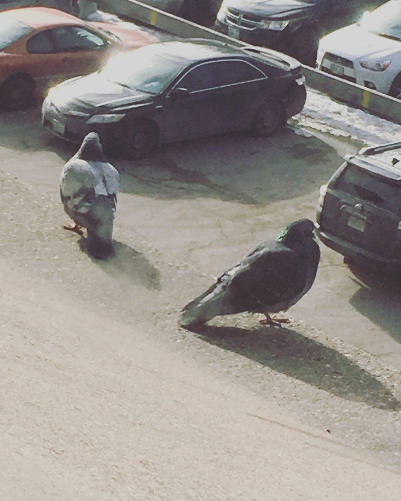 2. Гигантские голуби иллюзия, люди, мир, обман, показалось, природа, фотография