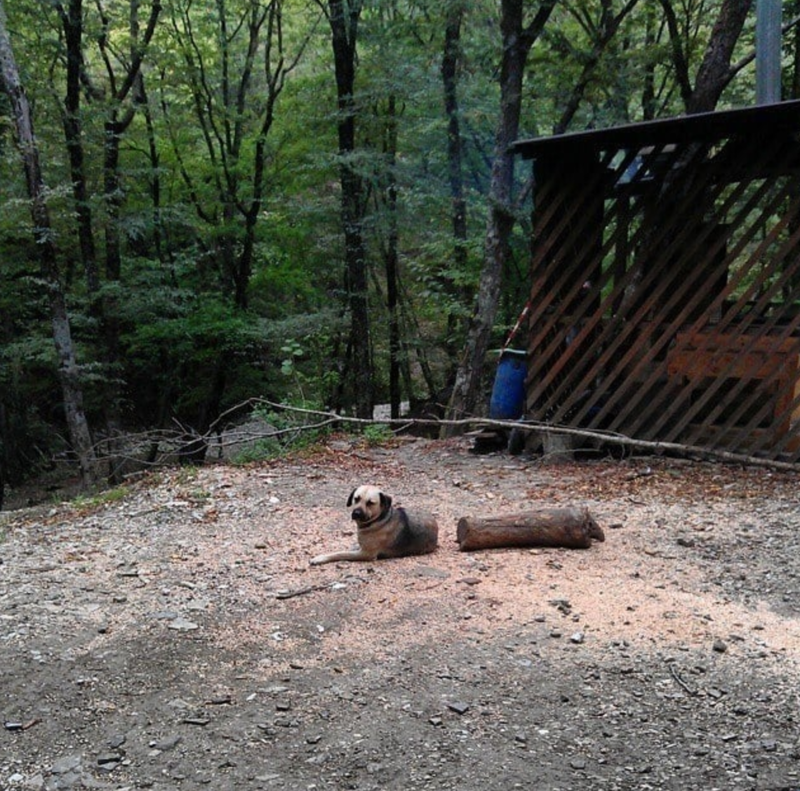 16. Собака-полено иллюзия, люди, мир, обман, показалось, природа, фотография