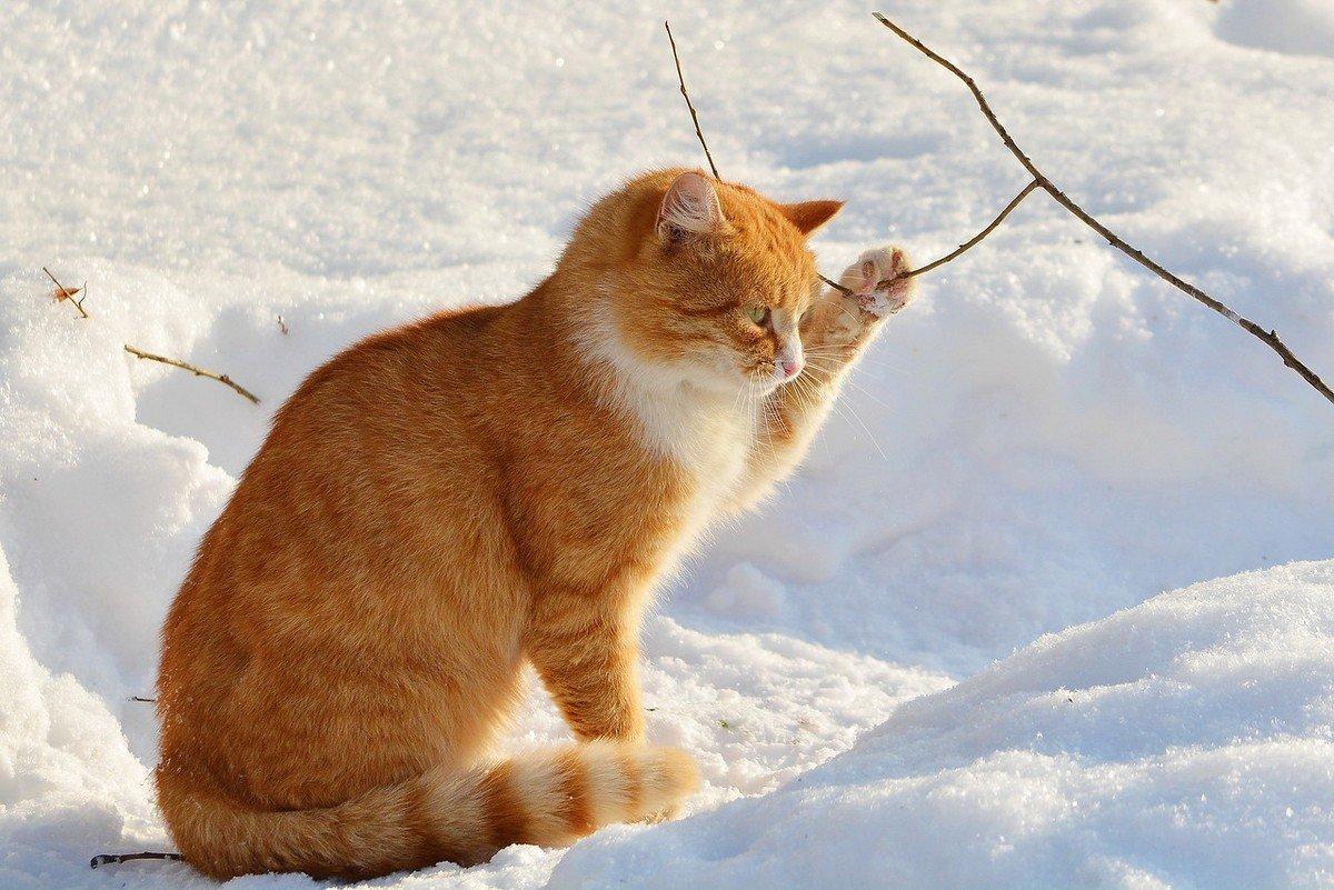 первым зимние фото животных качества подготовки