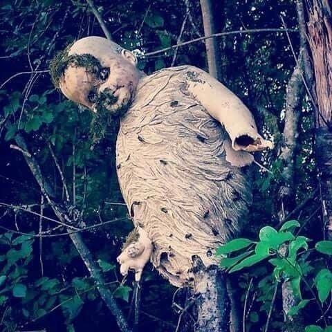 Фильм ужасов наяву: осы свили гнездо вокруг старой выброшенной куклы мрачно, мрачные шутки, необычно, необычные картинки, необычные фотографии, природа, пугающе, фото