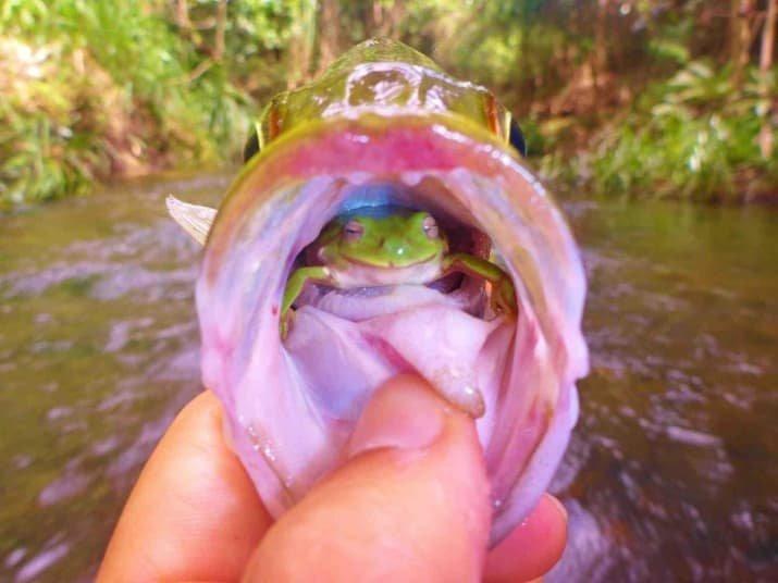 Храбрая лягушка так и не дала рыбе себя проглотить мрачно, мрачные шутки, необычно, необычные картинки, необычные фотографии, природа, пугающе, фото