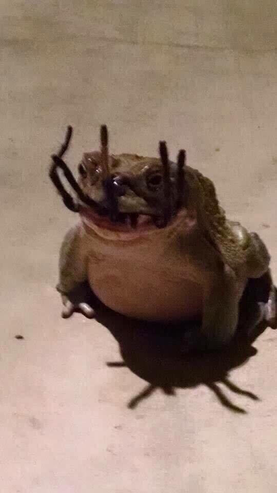 Жаба, только что съевшая большого паука, похожа на адское чудовище мрачно, мрачные шутки, необычно, необычные картинки, необычные фотографии, природа, пугающе, фото