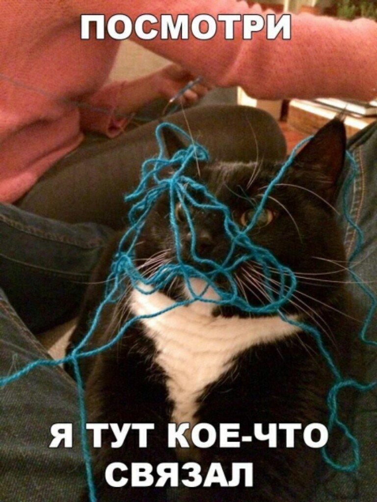 Субботний котопост кошки, приколы с котами, смешные коты, юмор.