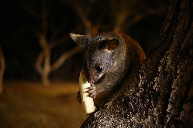 Животные тоже хотят вас убить австралия, в мире, животные, люди, природа, путешествие