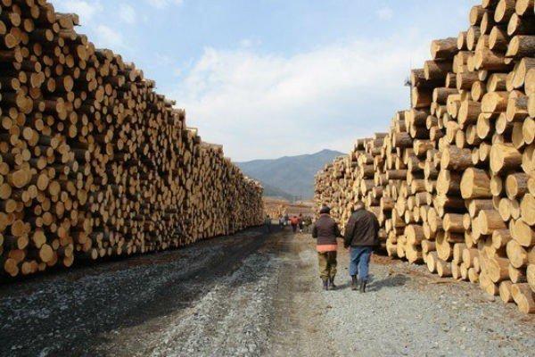 Лес рубят, щепки летят лес, продажа, родина