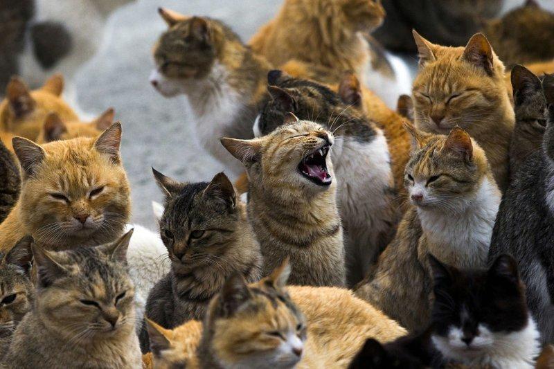 Остров кошек Остров Кошек, Тасиро, фоторепортаж