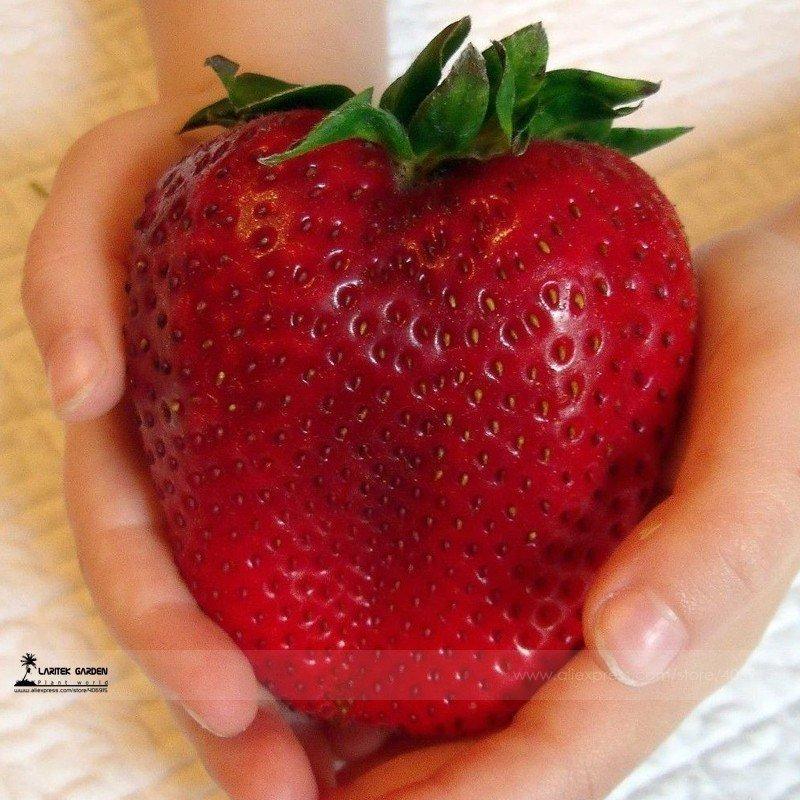 10. Семена клубники... огромной клубники aliexpress, вещи, гаджет, интернет-магазин, необычно, подарки