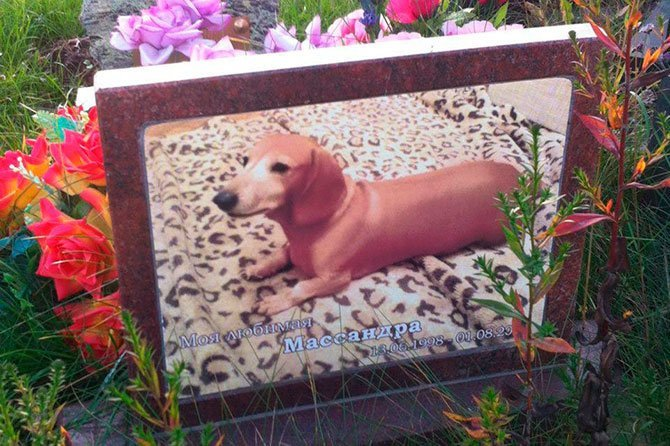 Кладбище домашних животных Кладбище домашних животных, грызуны, кошечки, попугайчики, собачки, фоторепортаж