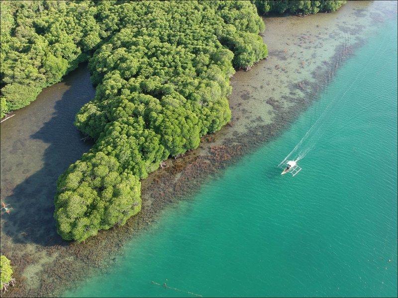 Мангр Мангровый лес, в мире, земля, планета, природа, экология