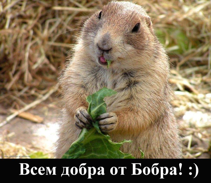 Друзья! Маленькая просьба беду, береги, животных, не делай, от костра, природу