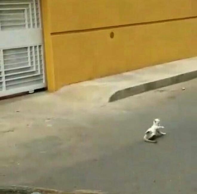 О состоянии кота ничего неизвестно  Сулия, венесуэла, живодерство, животные, издевательство, кот, футболист