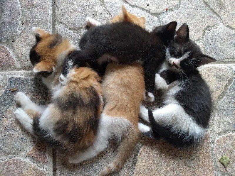 Люди две недели пытались найти котят бездомной кошки, пока она сама не принесла котят к ним домой история, кошки, спасение