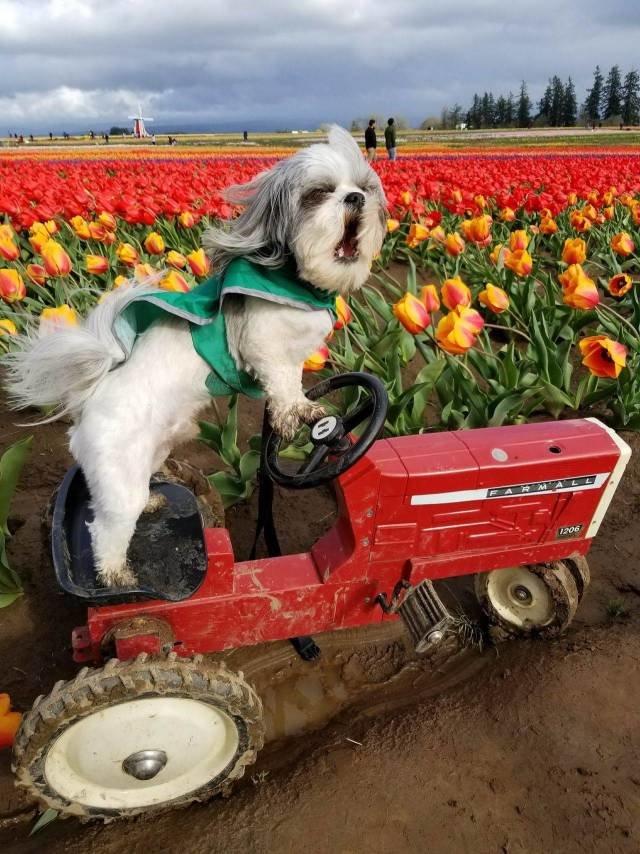 Фотоподборка за 10.04.2018 день, животные, кадр, люди, мир, снимок, фото, фотоподборка