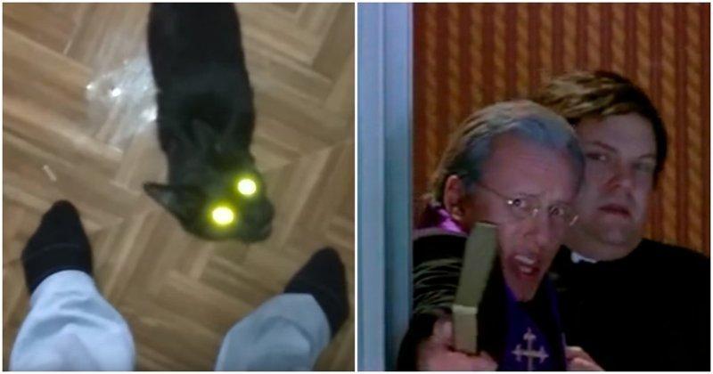 """""""Ласковый и нежный"""" зверь встречает хозяев после кошачьей выставки видео, животные, кошка, прикол, реакция, хозяева, хозяин, юмор"""
