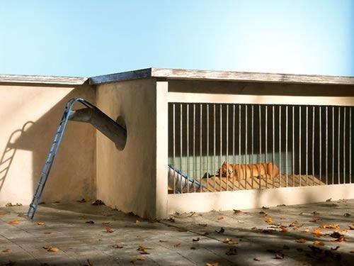 Зоопарк детализация, искусство, рисунок, фотограф, художник