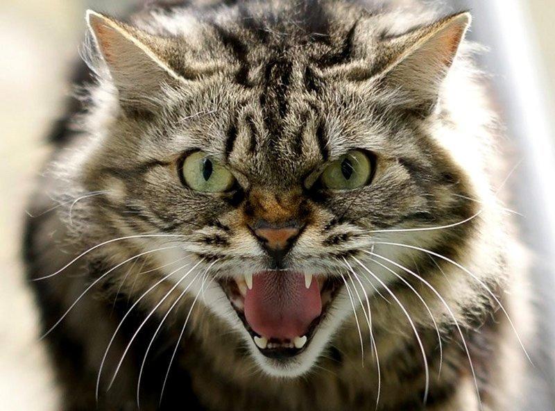 Вся семья госпитализирована из-за взбесившегося котика ynews, животные, злой котик, интересное, котик, происшествие, фото