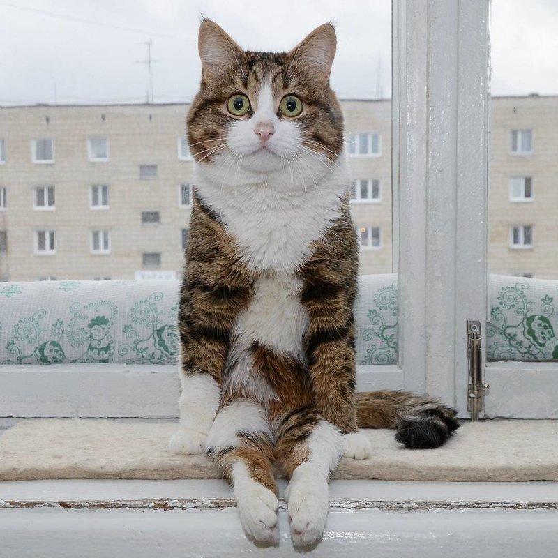 Несмотря на свои проблемы со здоровьем, эта кошка покорила Интернет своими смешными выражениями мордашки  домашний питомец, животные, кот, кошка, мимика, морда, эмоция