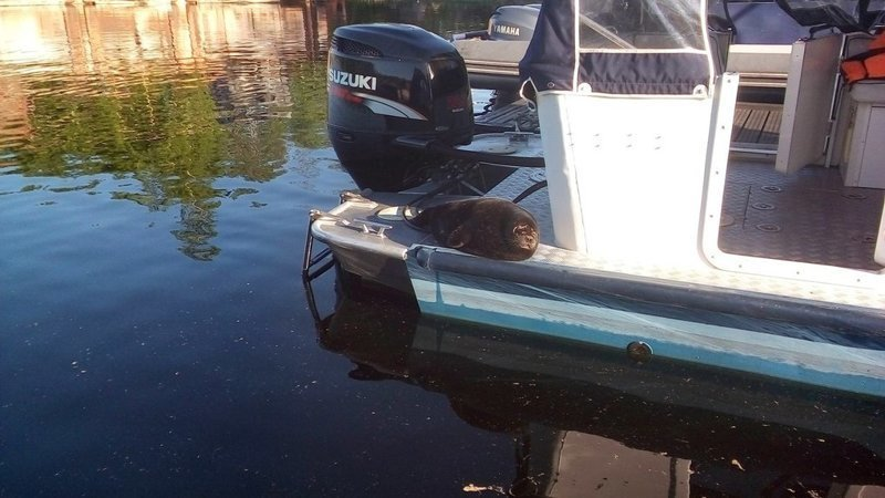 Теперь Крошик всё время живёт в Центре — тут у него есть рыба, бассейн, игрушки и бесконечное чесание пузика Детёныш, Нерпа, Спасённый, добро, животные, котик