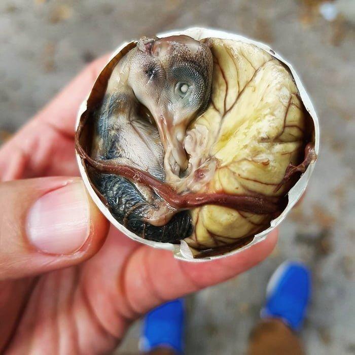 9. Balut - Филиппины блюда, в мире, деликатесы, еда, национальная кухня, путешествия, разные страны, фото