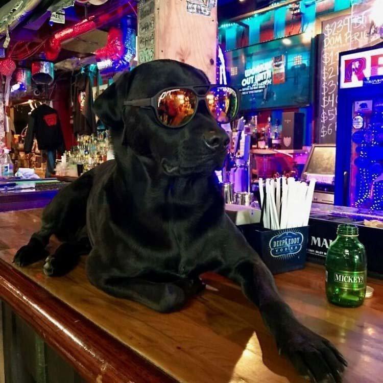 «Jimmy's на Red Dogs» — это то место, где вы можете выпить, послушать живую музыку или погладить Крузера (Kruzer), собаку бара и одновременно её лицо в мире, добро, история, кошелек, люди, находка