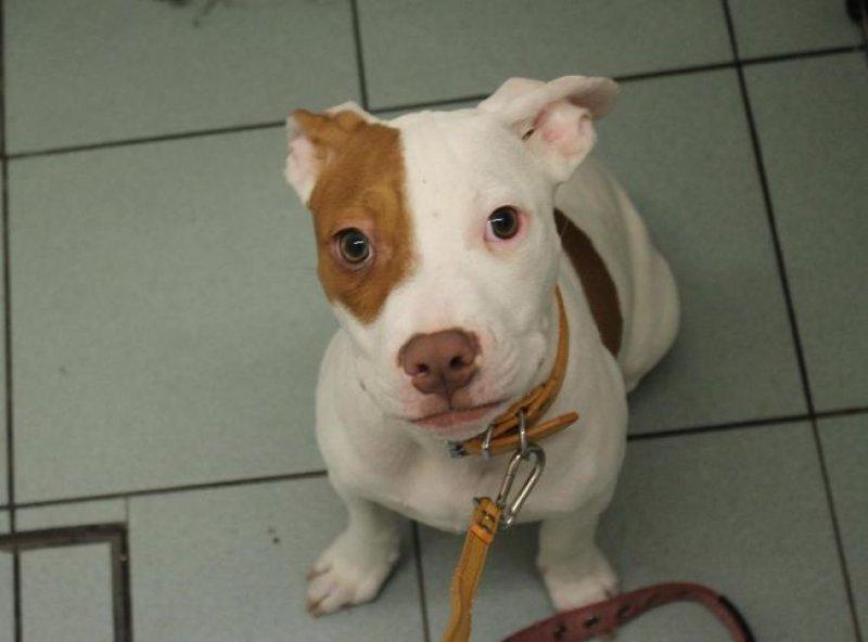Глухой пёс, от которого пять раз отказывались, обрёл дом и учит язык жестов глухой, животные, истории, питомцы, пёс, собака, собаки, спасение