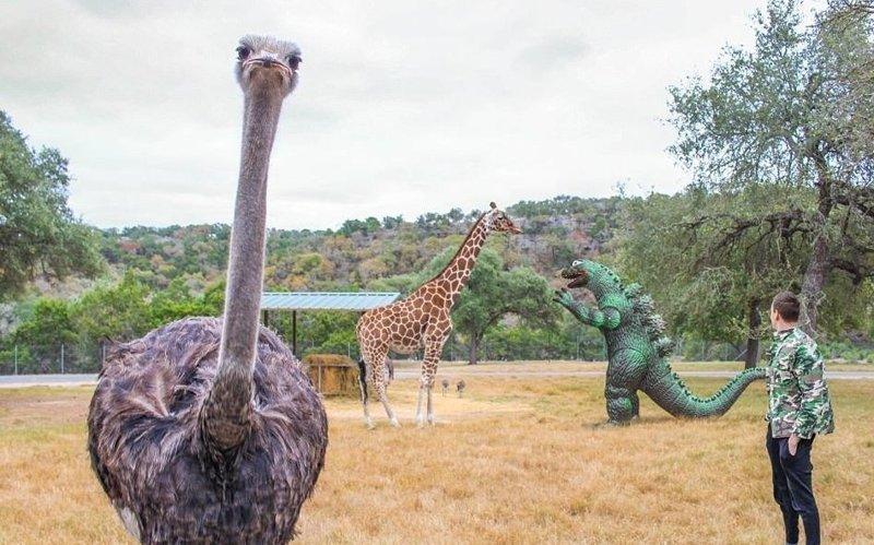 Встреча с дальними потомками Райан Годзиллинг, дино-путешественник, динозавр, на фоне памятников, необычно, оригинально, фото, фотографии