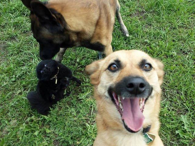 11. Селфи-фотобомба животные, забавно, подборка, прикол, селфи, юмор