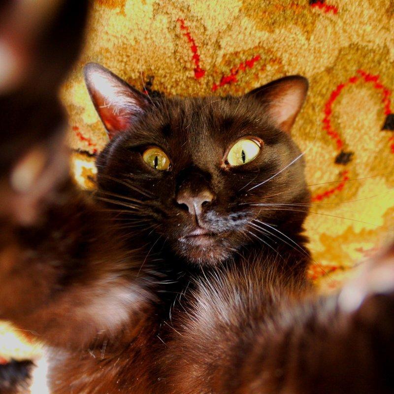 16. Кот-завсегдатай вечерин животные, забавно, подборка, прикол, селфи, юмор