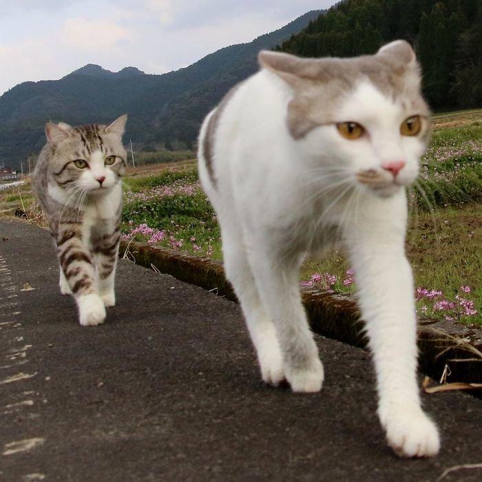 Фотогеничность зашкаливает: кот, который всегда замечательно выходит на снимках Нянкичи, животные, знаменитость, кот, фотогеничность, фотография, япония